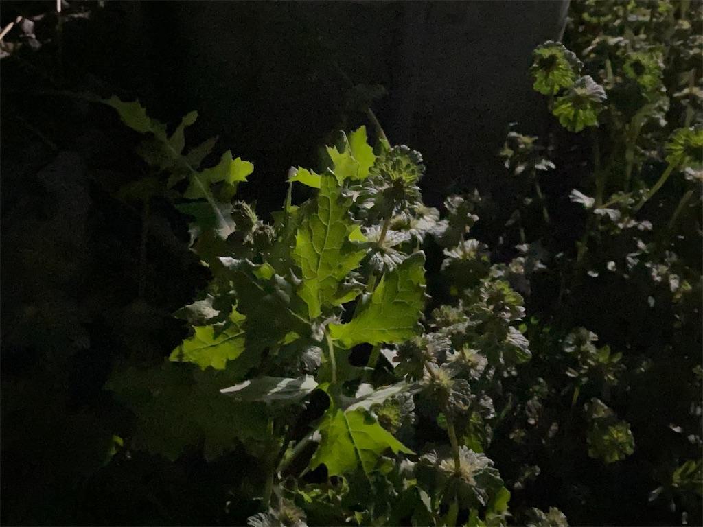 f:id:yanaharamizuho:20210525054222j:image