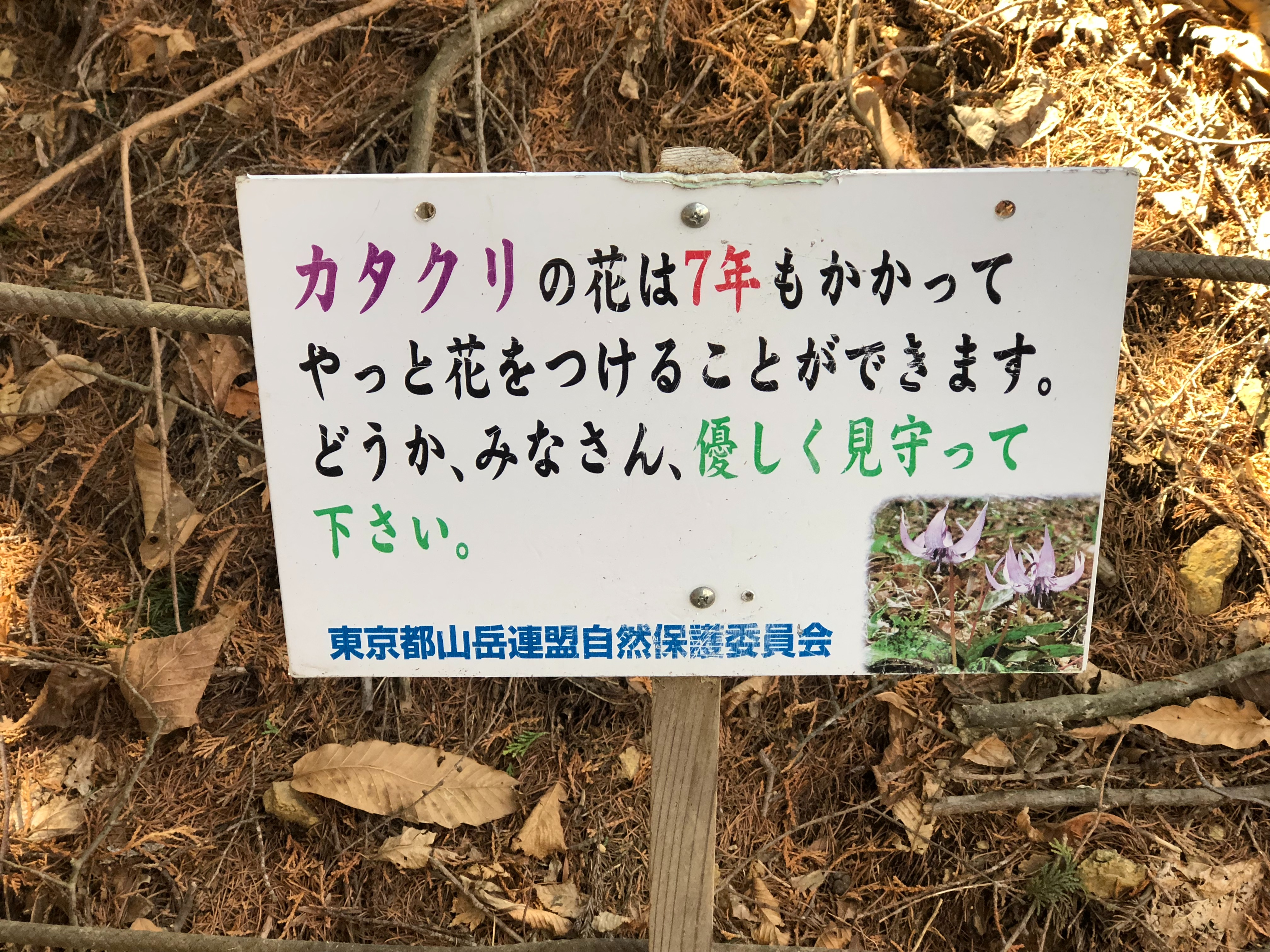 f:id:yanakahachisuke:20180410002344j:image