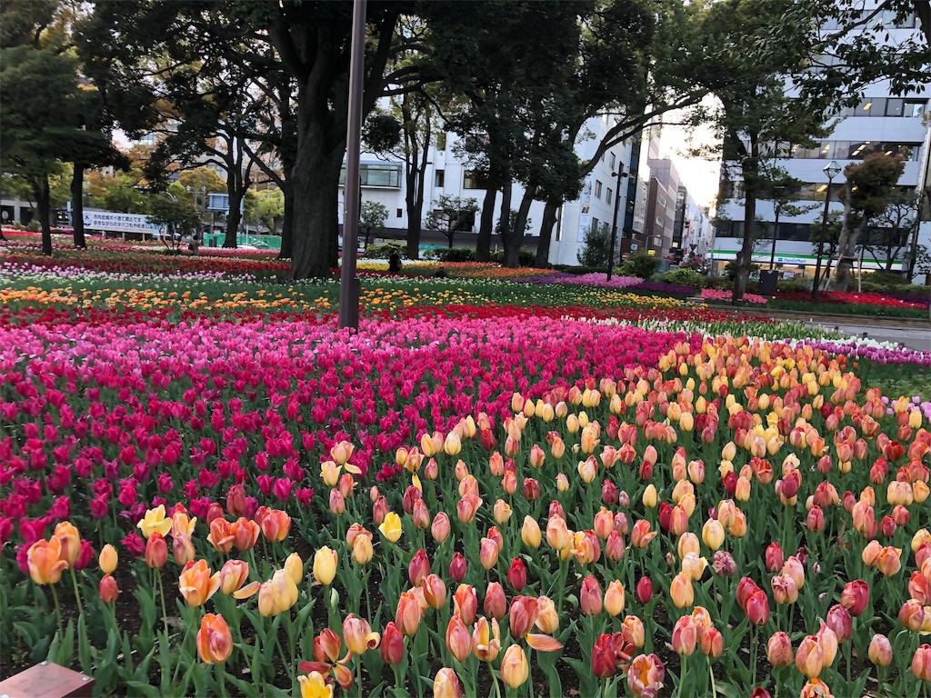 f:id:yanakahachisuke:20190415173133j:image