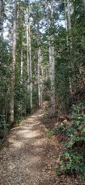 f:id:yanakahachisuke:20200222170655j:image