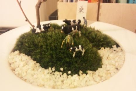 これが、私が作ったマン盆栽。牛がメインですけど♪