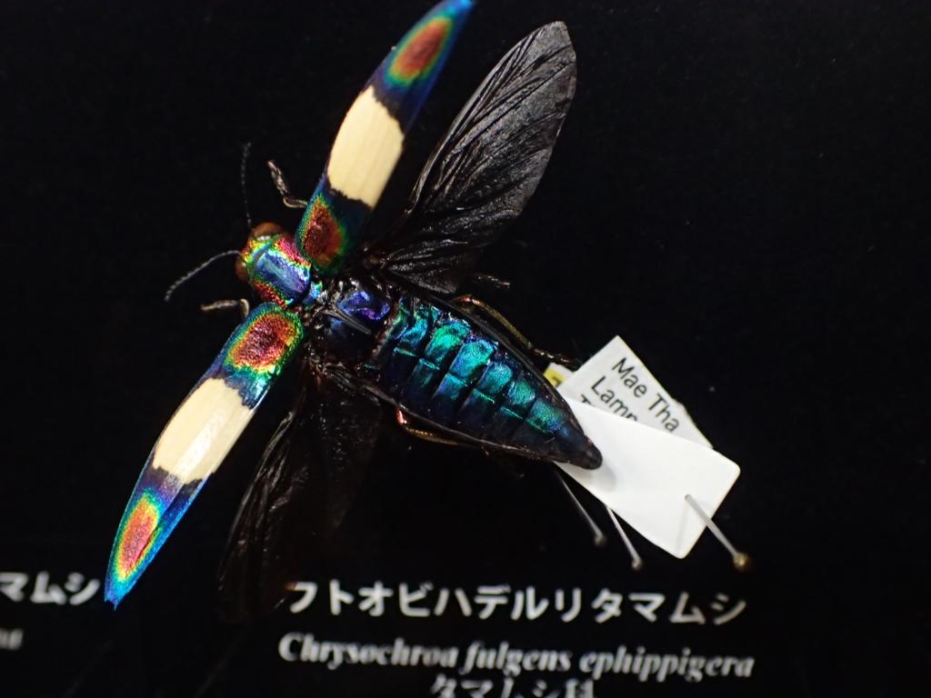f:id:yanenouenomushi:20160813153302j:plain