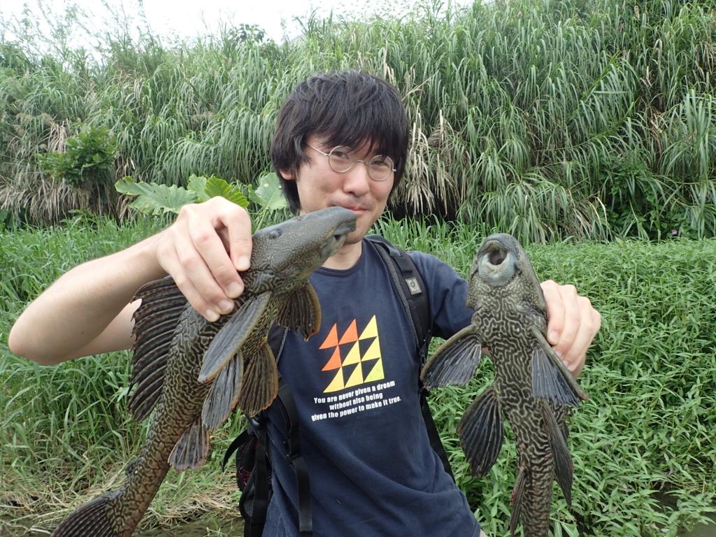 f:id:yanenouenomushi:20170530234403j:plain