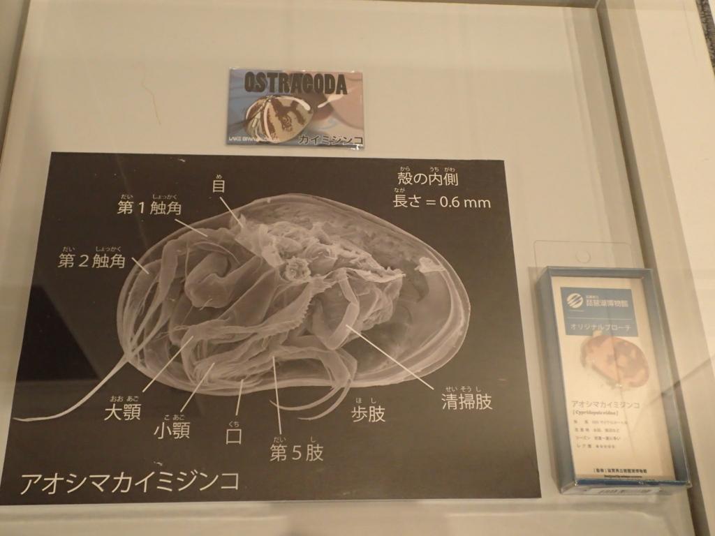 f:id:yanenouenomushi:20170902044229j:plain