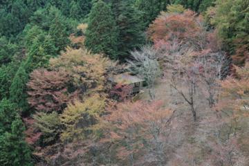 f:id:yaneshin:20111105131145j:plain