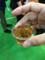 古代米で造られたお酒