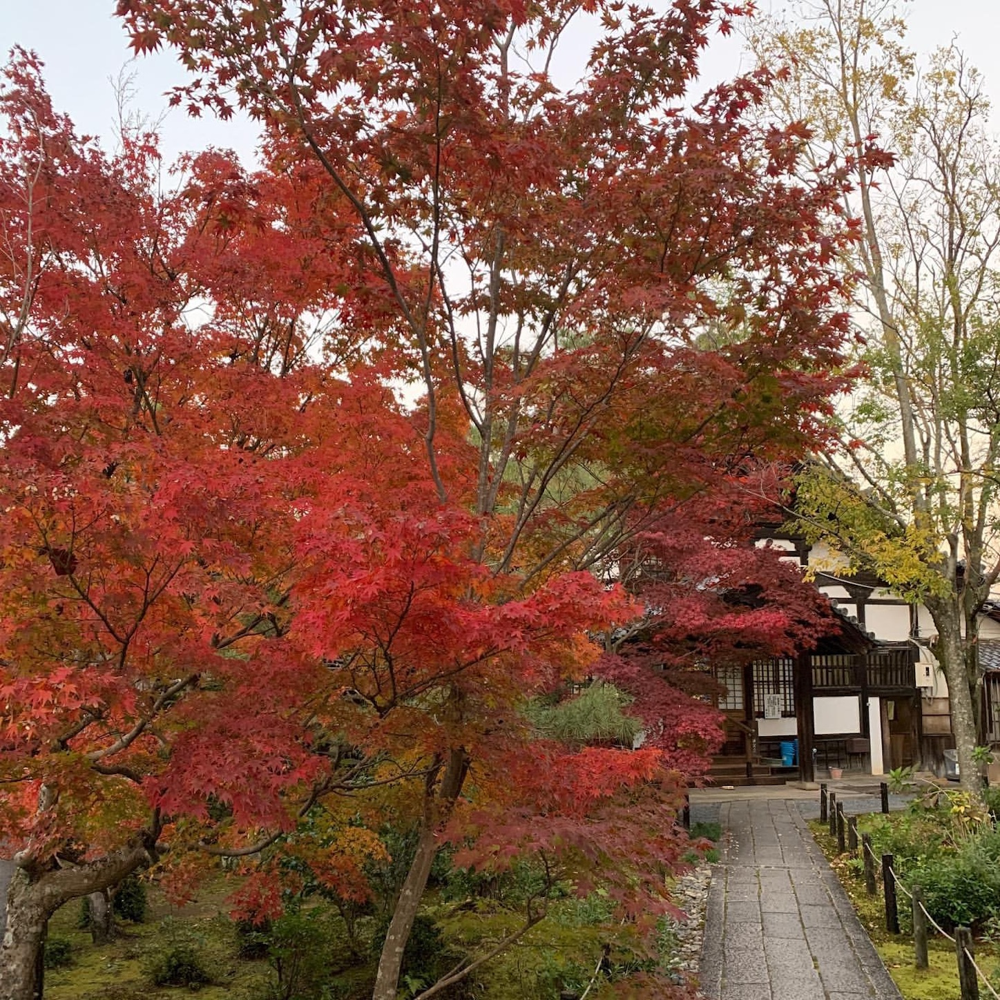 清涼寺の紅葉