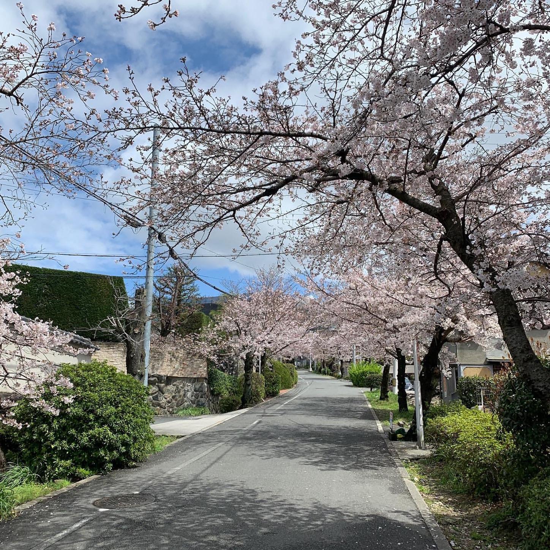 枚岡公園への道中にある桜並木