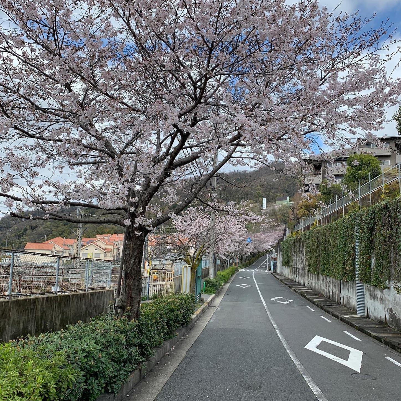 石切駅そばの桜並木
