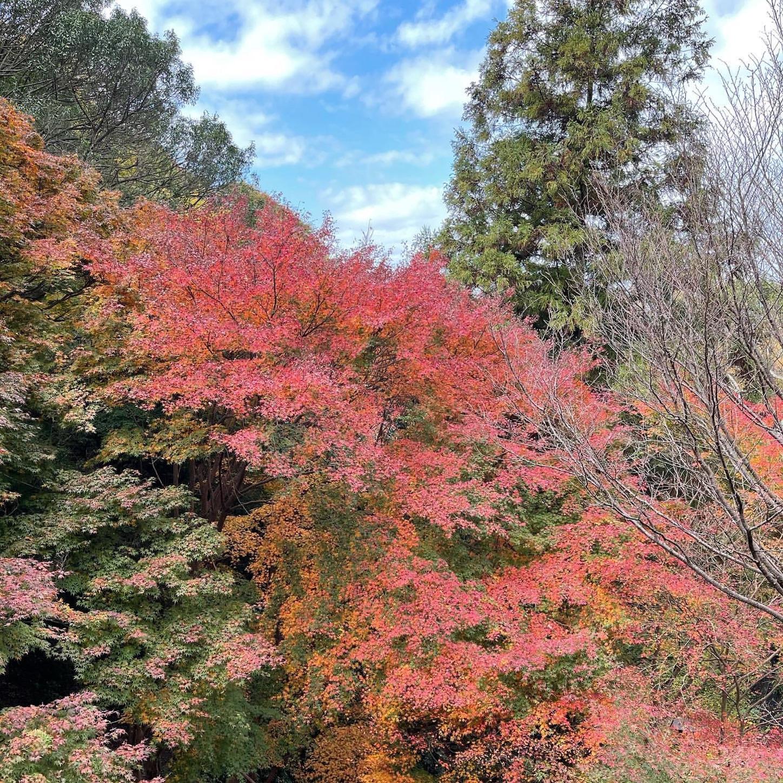 生駒山の紅葉