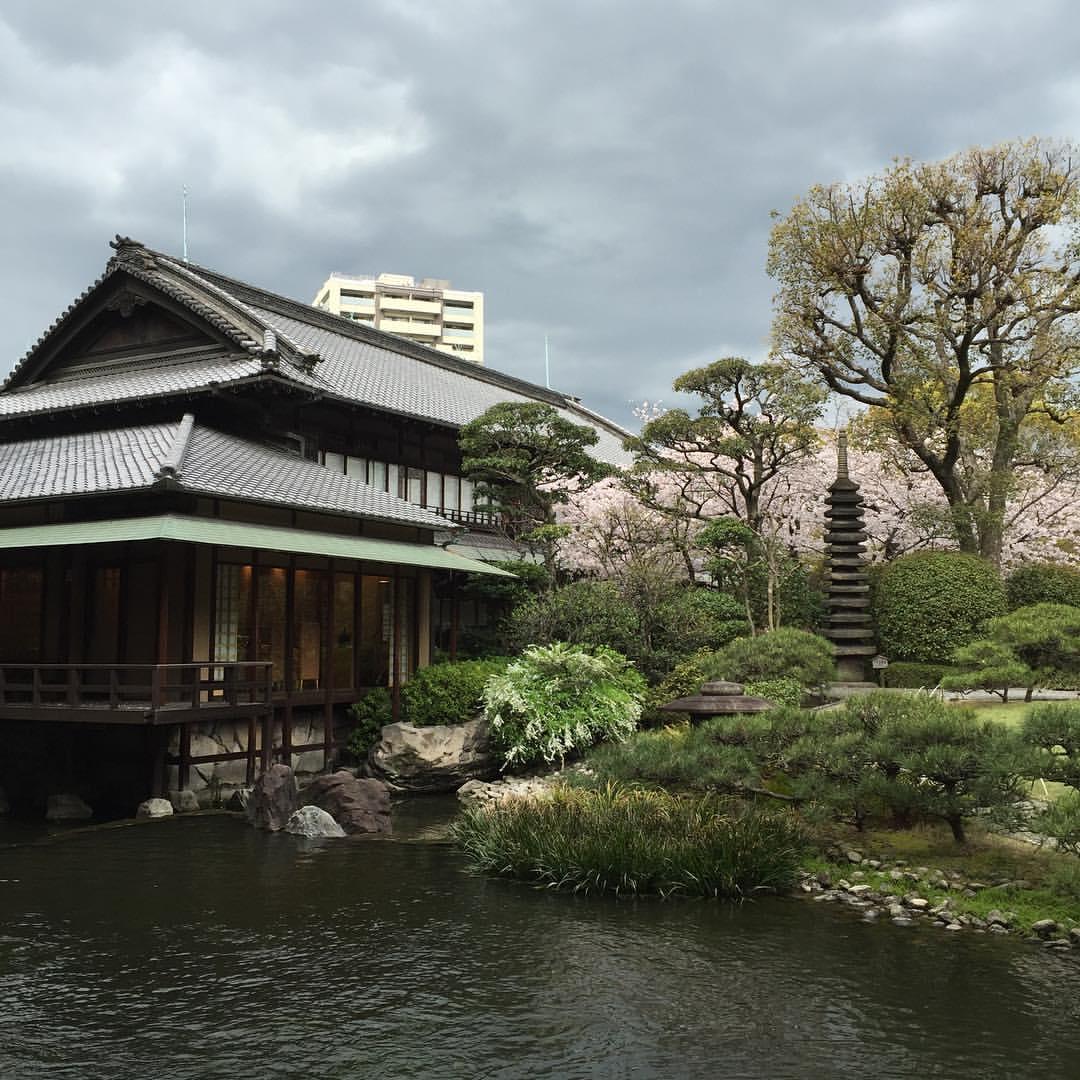 淀川邸の桜