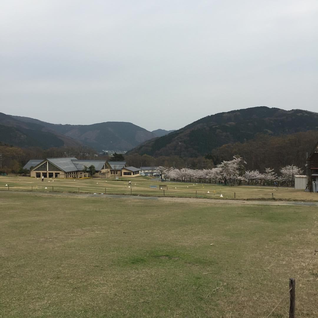 マキノ高原の桜2