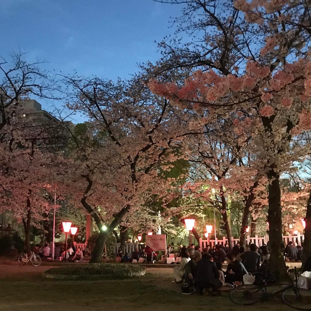 高津神社の夜桜1
