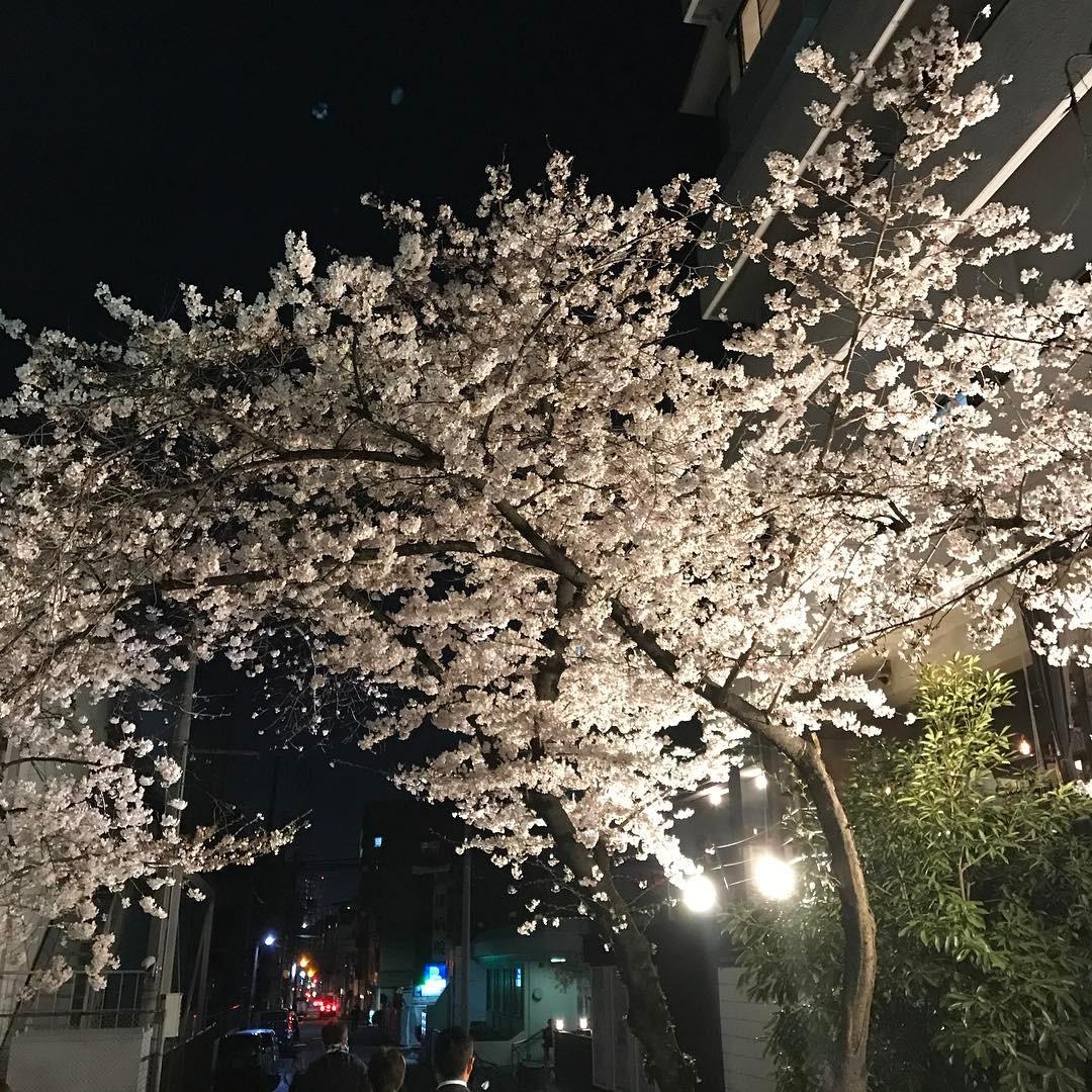 高津神社の夜桜2