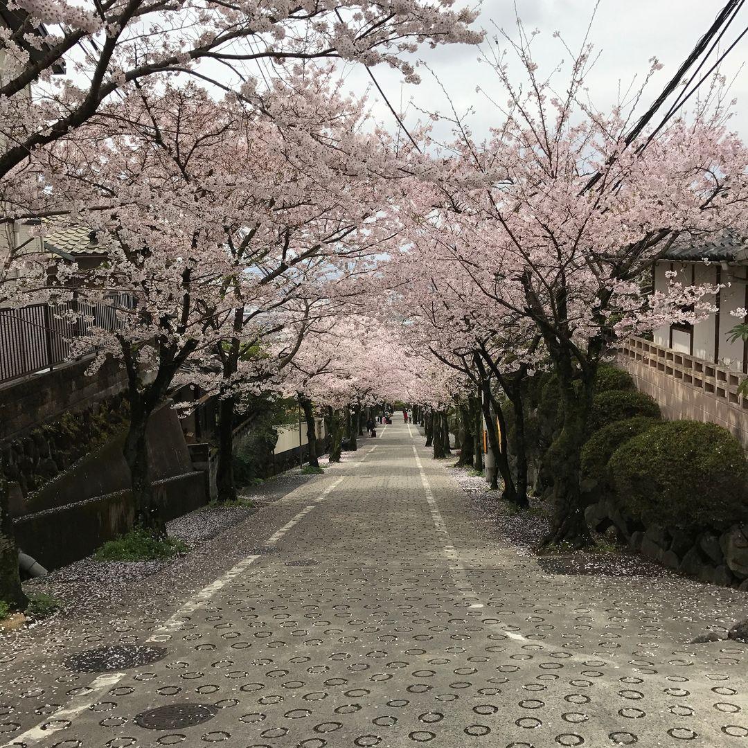 石切駅西側の桜坂