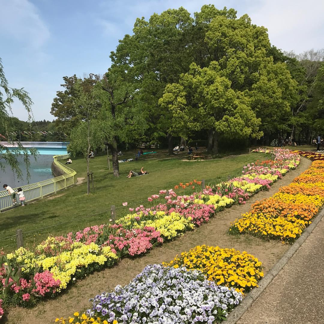 長居植物園の花1