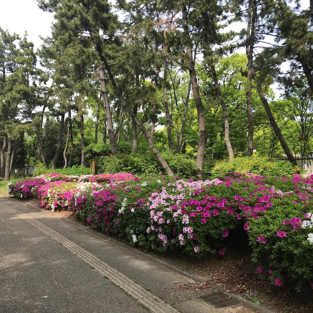 長居植物園の花2