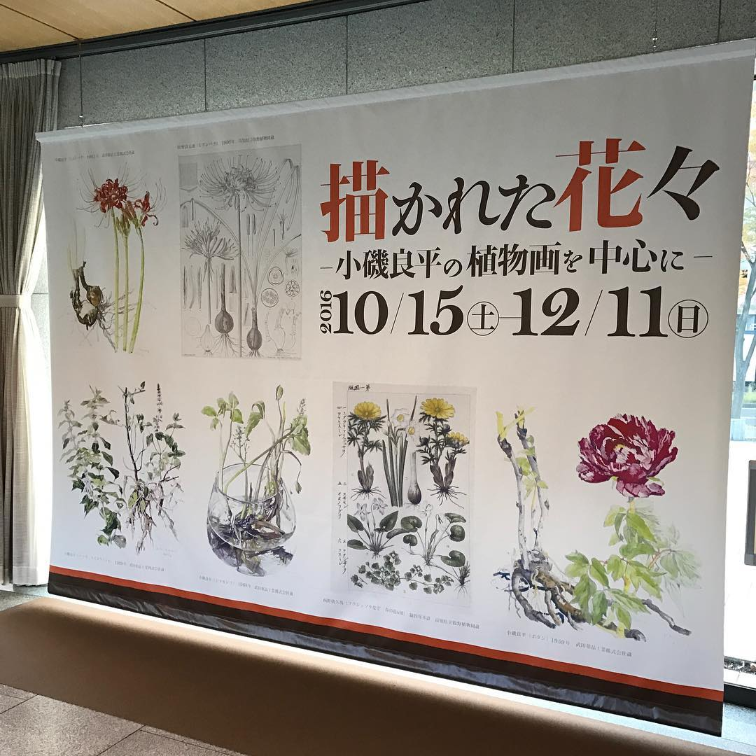 描かれた花々〜小磯良平の植物画を中心に〜