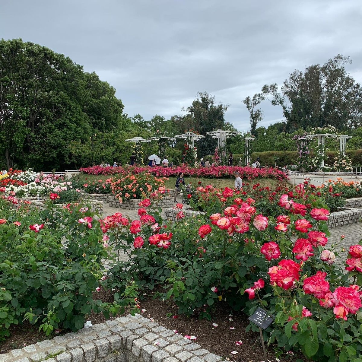 長居植物園のバラ園