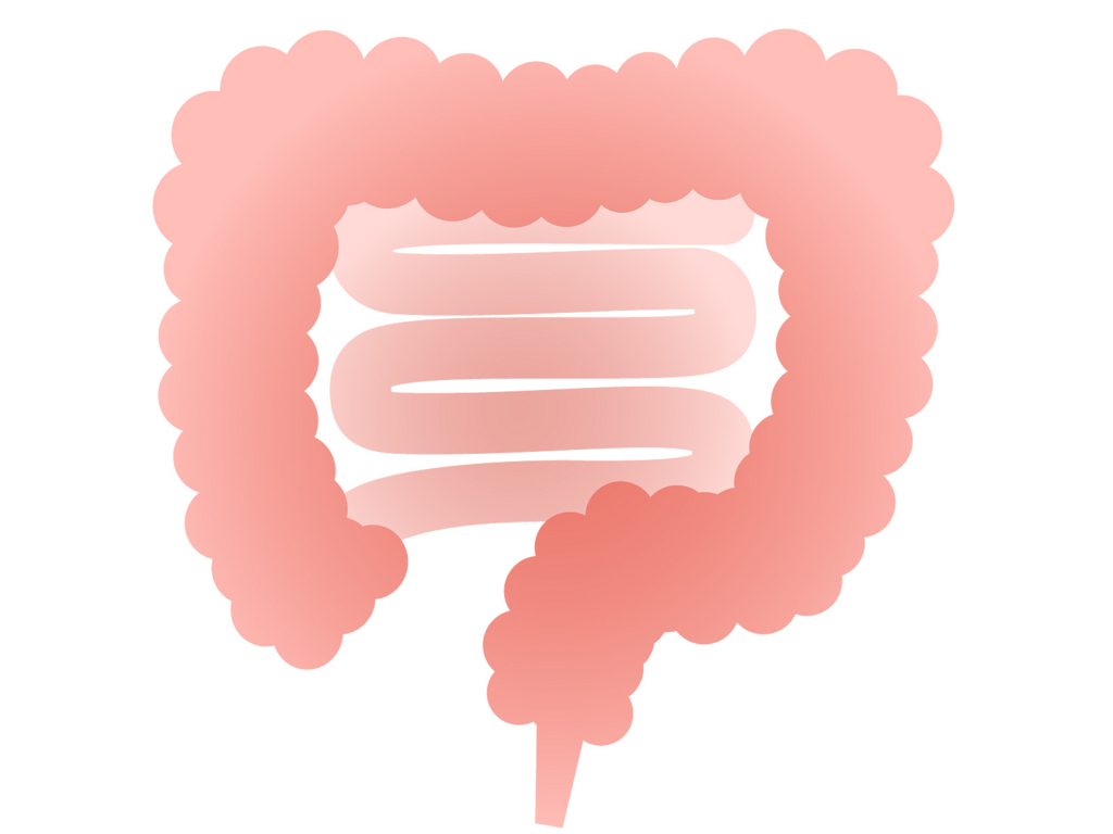 過敏性腸症候群と腸内フローラ改善