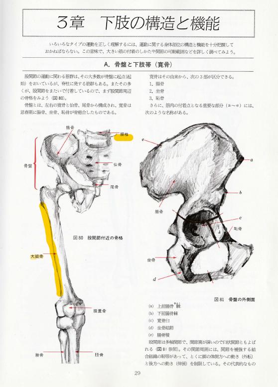 股関節と大腿骨の働き、徐言偉太極拳ブログ