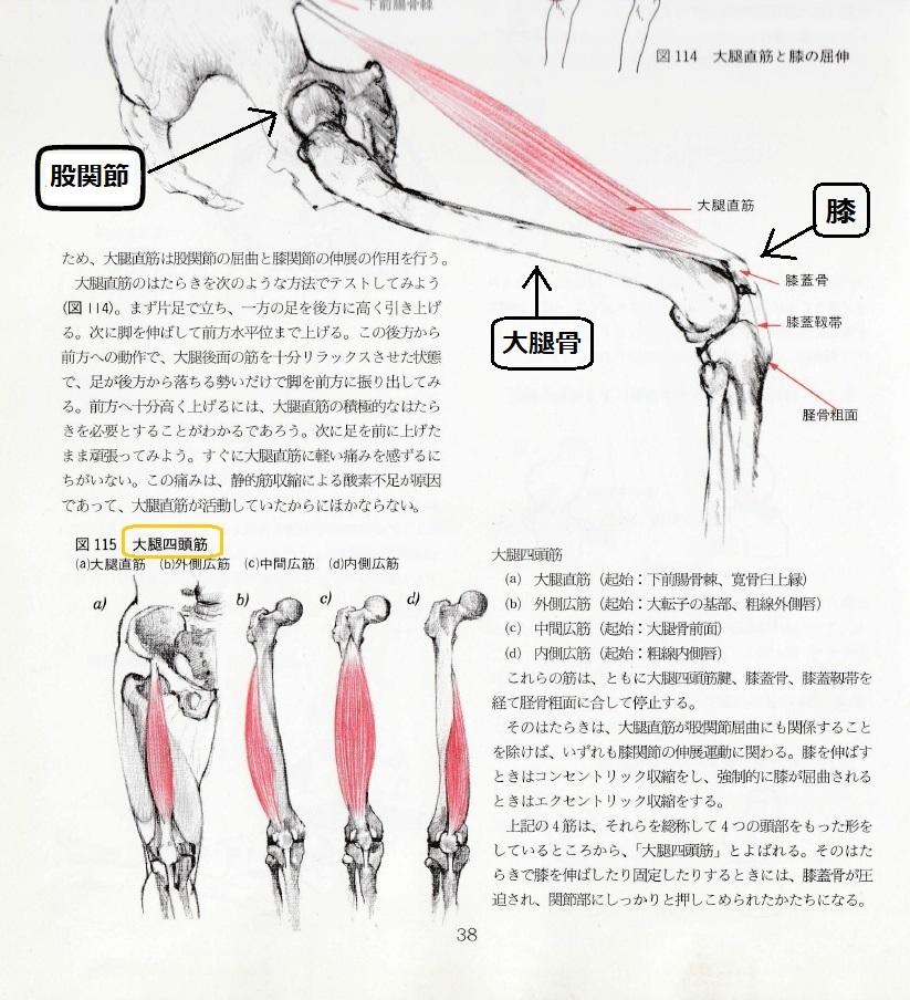 太極拳における股関節と膝の使い方、徐言偉ブログ