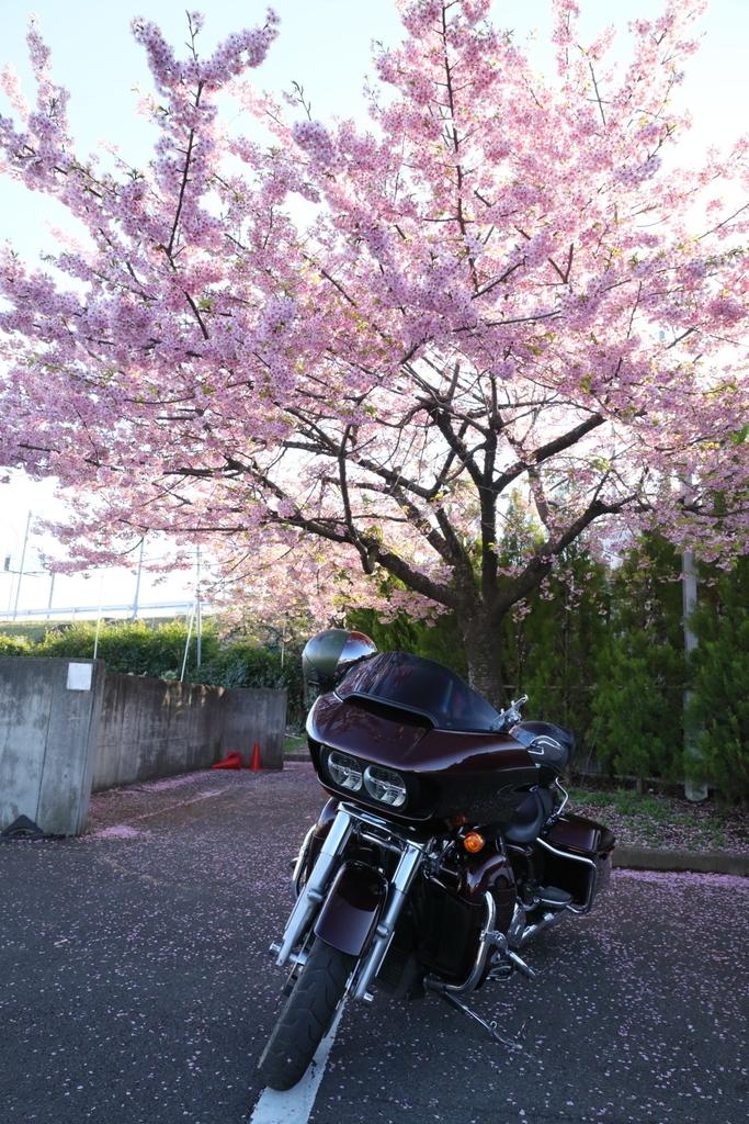 f:id:yapuu-rider:20190310191941j:plain