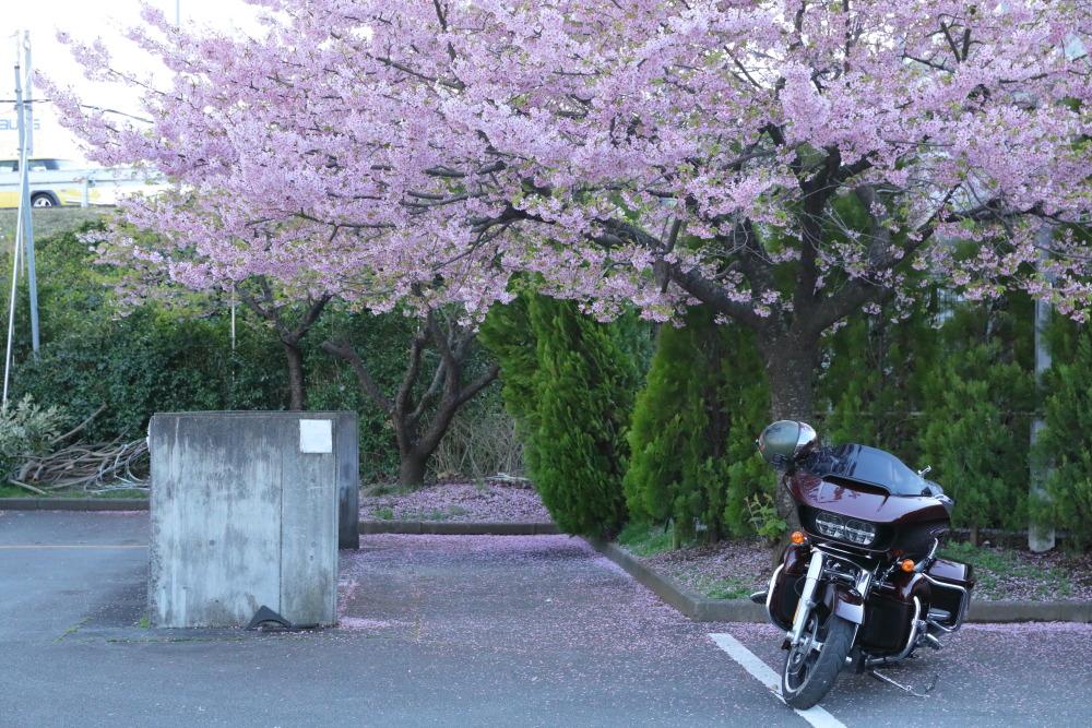 f:id:yapuu-rider:20190310192054j:plain