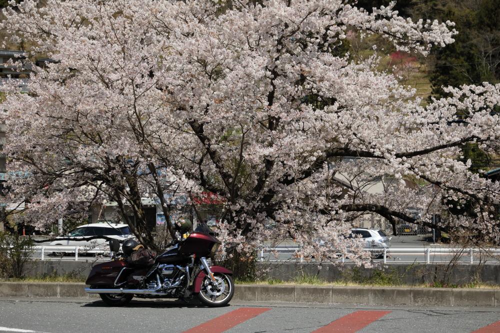 f:id:yapuu-rider:20190417202446j:plain