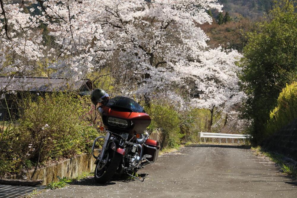 f:id:yapuu-rider:20190417202549j:plain