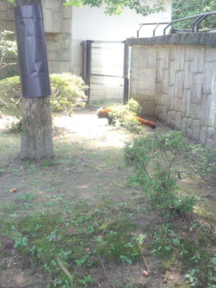f:id:yasagure-m:20140820112035j:image:w360