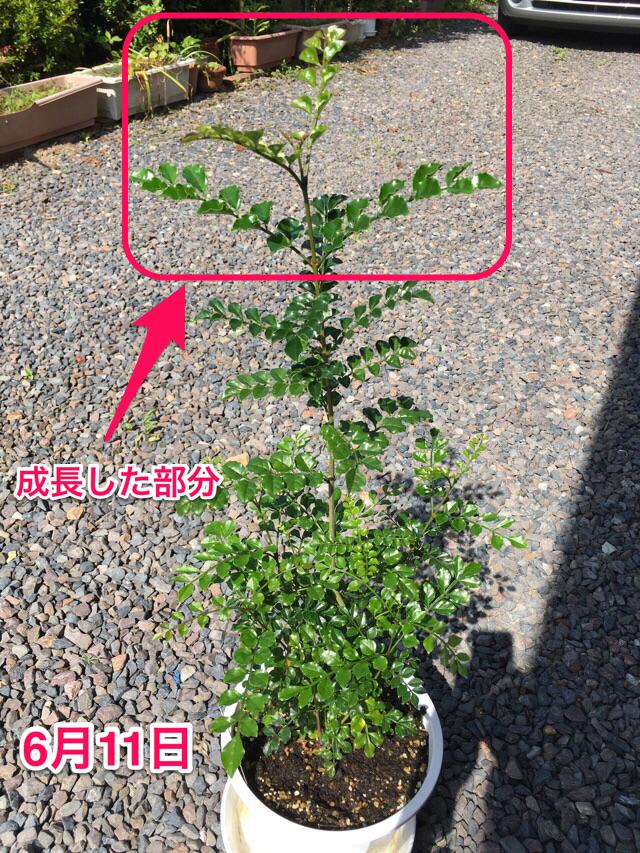 f:id:yasai18:20160612062712p:plain