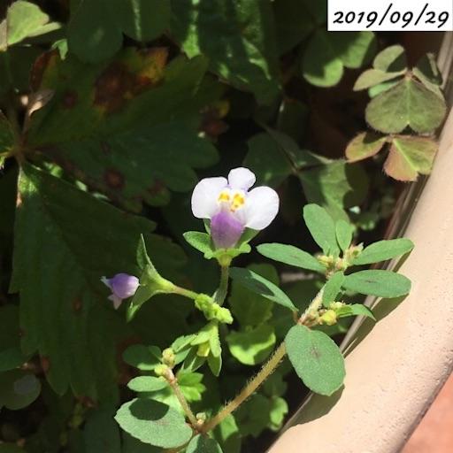 f:id:yasai18:20191119205622j:image