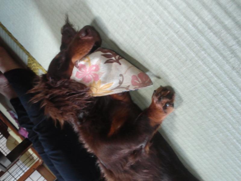 f:id:yasaibo-ro:20120708172918j:image:w360