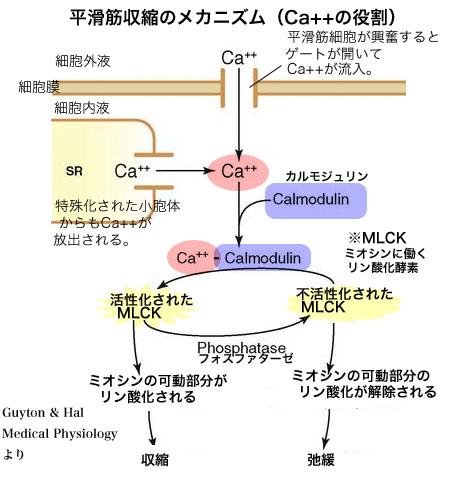 f:id:yashiki5296:20160622022921p:plain