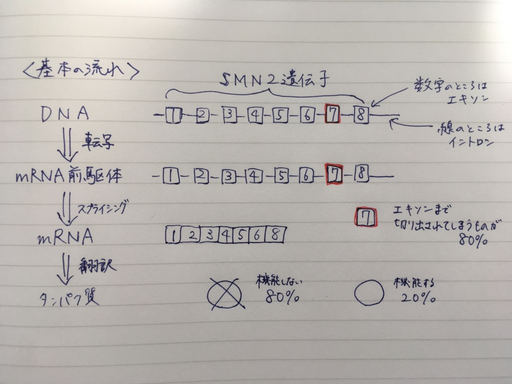 f:id:yashiki5296:20170518085124j:plain