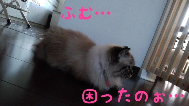 f:id:yasu-hito-i0863:20190912081537j:plain
