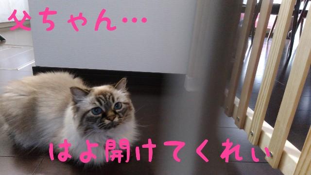 f:id:yasu-hito-i0863:20190912081616j:plain