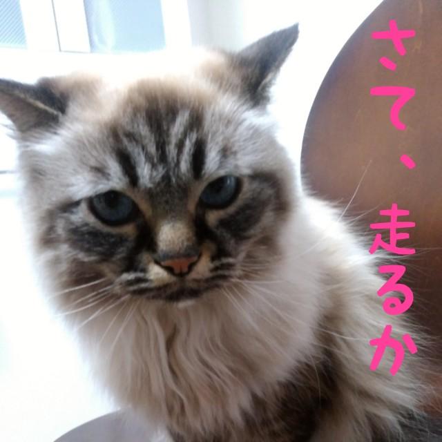f:id:yasu-hito-i0863:20190912104533j:plain