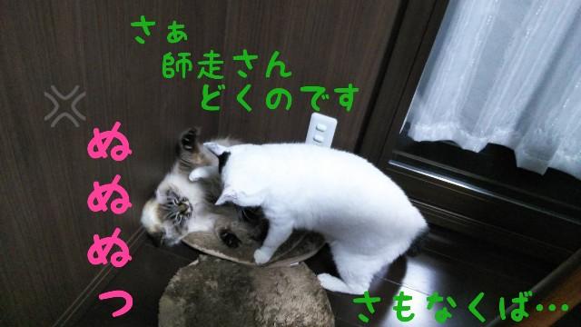 f:id:yasu-hito-i0863:20191206071508j:plain