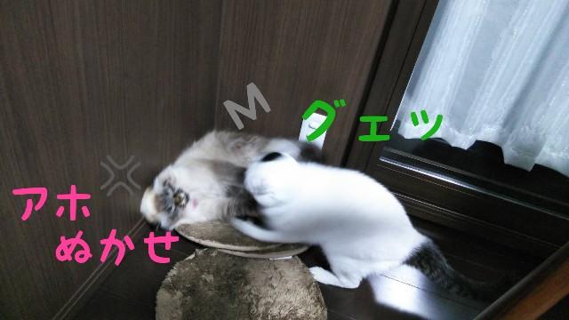 f:id:yasu-hito-i0863:20191206071513j:plain