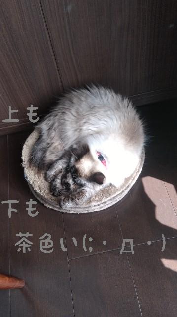 f:id:yasu-hito-i0863:20191206075408j:plain