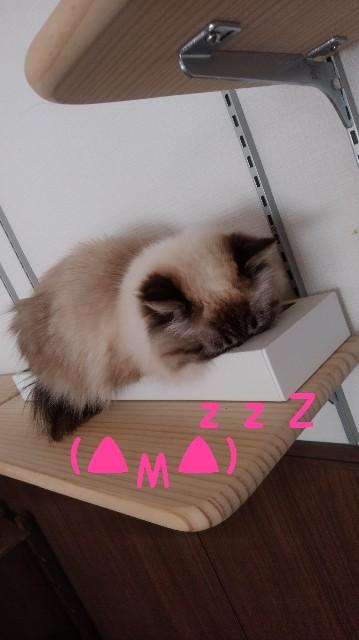 f:id:yasu-hito-i0863:20191210103427j:plain