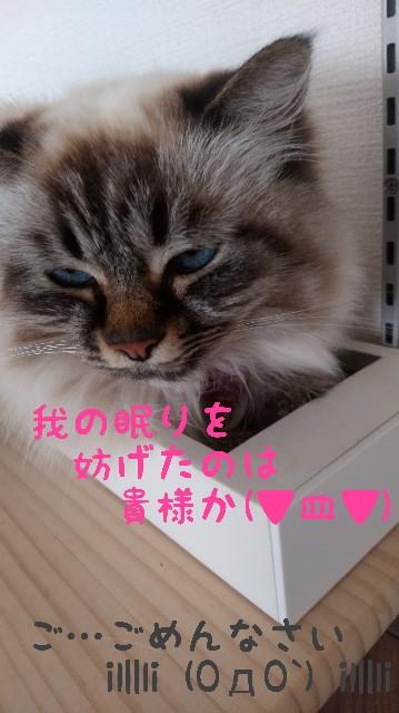 f:id:yasu-hito-i0863:20191210103435j:plain