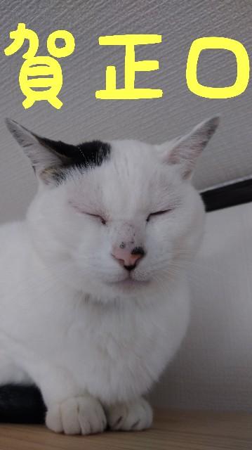 f:id:yasu-hito-i0863:20200106190928j:plain