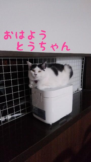f:id:yasu-hito-i0863:20200121211520j:plain