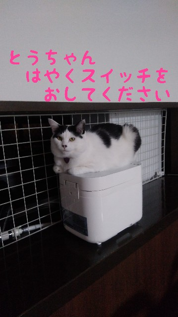 f:id:yasu-hito-i0863:20200121211800j:plain
