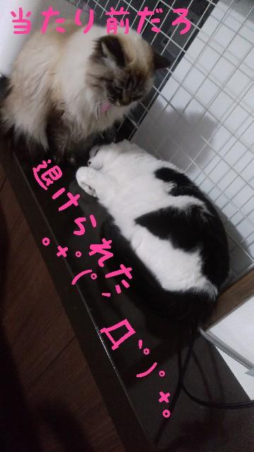 f:id:yasu-hito-i0863:20200121212718j:plain