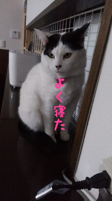 f:id:yasu-hito-i0863:20200121212737j:plain