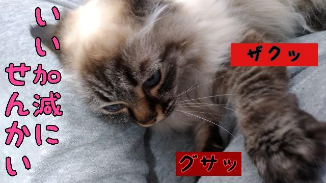 f:id:yasu-hito-i0863:20200215184128j:plain